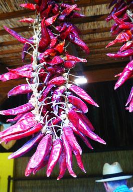 10. August 2015 - Piroschka liebt Paprika in der Puzzta