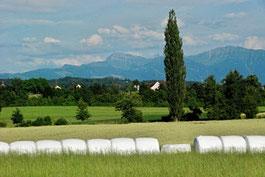 Landschaft, Pappel, Berge, Speer