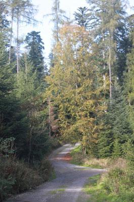 auf dem Jägerweg zurück ins Axtbachtal
