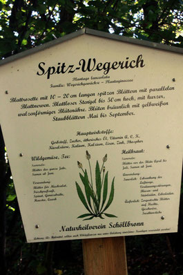 erklärende Tafeln der Schöllbronner Vereine, liebevoll gestaltet - hier vom Naturheilverein zum Spítz-Wegerich