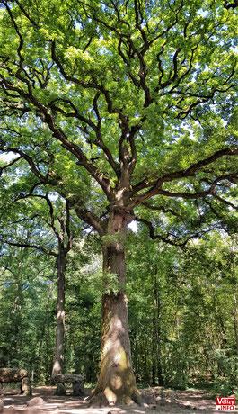 Le Chêne en 2021.