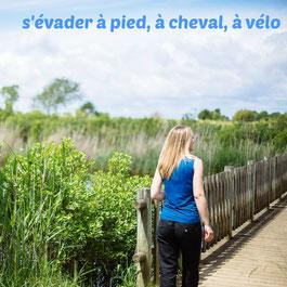 Le Teich Vacances , Bassin Arcachon Tourisme - S'évader à pied, à cheval, à vélo
