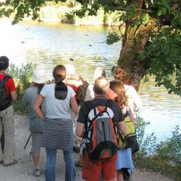 Le Teich Vacances , Bassin Arcachon Tourisme - visites guidées, kayak de mer, canoë collectif, vélo