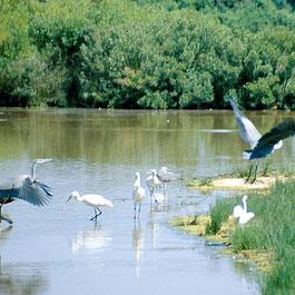 Le Teich Vacances , Bassin Arcachon Tourisme - réserve ornithologique du teich