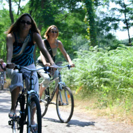 Le Teich Vacances , Bassin Arcachon Tourisme - vélo et pistes cyclables