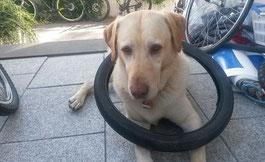 Bild: Cahrly Fahrradmix Pannenhund für Fahrradverleih
