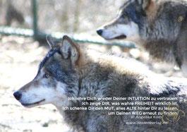 wolf sprüche weisheiten Weisheiten über Wölfe/Lebensweisheiten/ind. Weisheiten   Der Wolf  wolf sprüche weisheiten