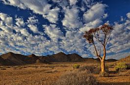 Kalahari Reise Südafrika und Namibia