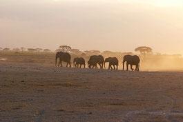 Große Migration Tansania Safari