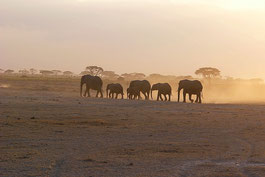 Elefanten Kenia Safari