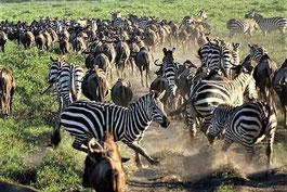 Tansania Safari mit Usambara Bergen