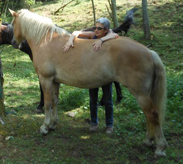 Formation-therapie-cheval