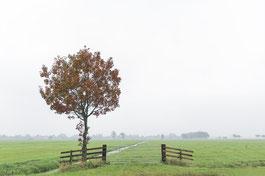 Herfst in de Albasserwaard