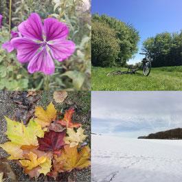 Jahreszeitenbilder Blume Sommerwiese Herbstlaub Schnee
