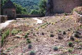 jardin du chateau de Baulx en cour de création