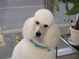 *美人で聡明で、およそ犬らしくないかのんでした!