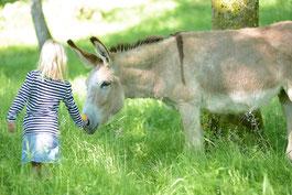 une randonnée en Limousin avec un âne