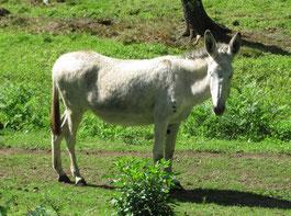 une randonnée avec un âne