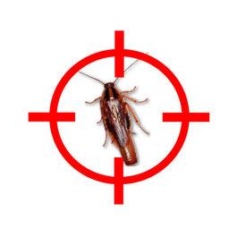 Extermination des blattes