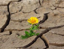 Durchbruch zu neuem Leben