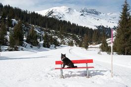 Nala auf roter Bank in Lech, Arlberg