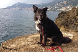 Hund Nala am Cap Martin mit Blick auf Monaco