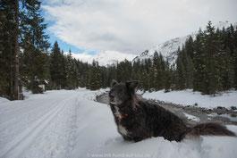 Hund im Schnee, Lech, Arlberg