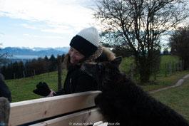 Nala, Hund auf Tour auf der Ilkahöhe, Starnberger See, Bayern
