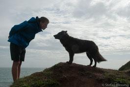 Junge und Hund auf Coast Path, Lizard, Cornwall