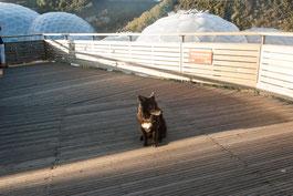 Hund Nala im Eden Project im Hintergrund die Gewächshäuser, Cornwall