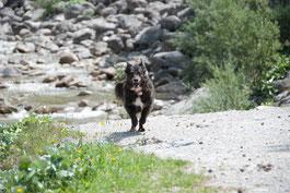 Kuhflucht in Farchant: Hund rennt, im Hintergrund Felsen, Steine und Bach