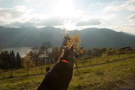 Schliersbergalm Hund blickt vom berg über den See in der untergehenden Sonne