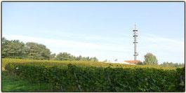 Lausitzer Weinfreunde Weinberg von M. u. K. Krause aus Klein Oßnig bei Cottbus
