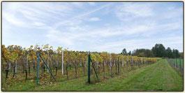 Lausitzer Weinfreunde Weinberg von Jürgen Rietze aus Luckau