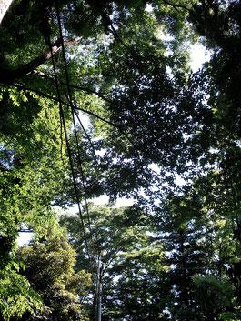 木漏れ日♡1