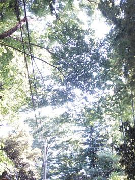 木漏れ日♡2