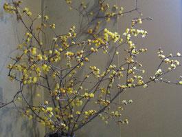 館内に飾られた春を告げるロウバイ