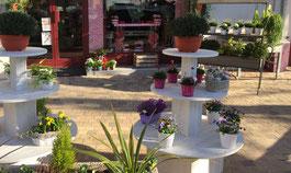 magasin-fleur-fleurs-fleuriste-fleuristes-balmeen-beaumes-de-venise