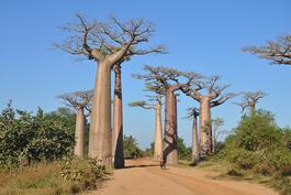 Baobabs in Madagaskar, Madagaskar Privatreise