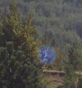 Orbe photographié dans la nature