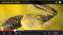 film - życie pszczół z bliska