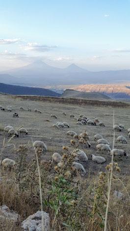 Blick auf den Ararat von der iranischen Seite
