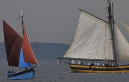 le grand bleu et le renard en baie de Douarnenez