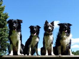 Monty, Aroha, Karanga, Kuri (von links)