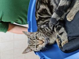 Dieses liebe Tier wurde gestern in unserer Heider Kleintierpraxis in der Heistedter Straße abgegeben und wartet in unserer Krankenstation auf ihren Besitzerer