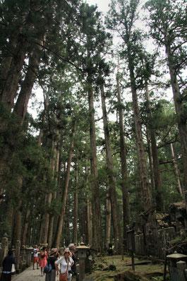 Koja-San, Japon : cèdres multicentenaires