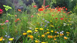 Naturnaher Garten - Thomas Staab - LBV Bildarchiv
