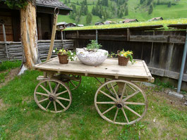 Floristik im Garten des Kuhnenhauses