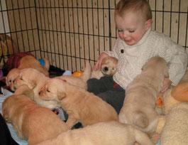 Bedminster NJ Dog trainer