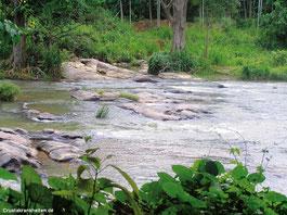 Uda Walawe Lake auf Sri Lanka: Dieser Biotop veranschaulicht sehr gut die Größe im Verhältnis zum Aquarium, in dem sich Veränderungen im Gegensatz zur natürlichen Umgebung sehr schnell durchsetzen.